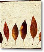 Forsythia Leaves In Fall Metal Print