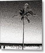 Fort Lauderdale Palm Tree Metal Print