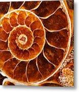 Fossil Nautilus Metal Print