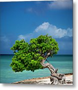 Fototi Tree - Aruba Metal Print