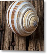 Found Sea Shell Metal Print by Garry Gay