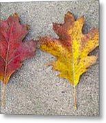 Four Autumn Leaves Metal Print