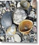 Four Beautiful Shells Metal Print
