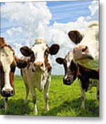 Four Chatting Cows Metal Print