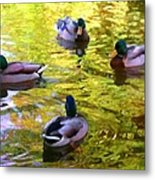 Four Ducks On Pond Metal Print