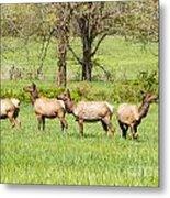 Four Elk Metal Print