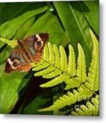 Four Eye Butterfly Metal Print