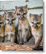 Four Fox Kits Metal Print