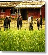 Four Horses Metal Print