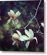 Four Magnolia Flower Metal Print