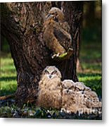 Four Owl Chicks In A Dark Forest Metal Print