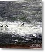 Four Pelicans By The Weir Metal Print
