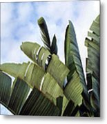 Four Seasons 7 Metal Print