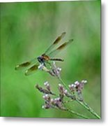 Four-spotted Pennant Metal Print