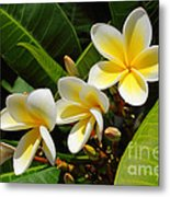 Four Summer Frangipanis Metal Print
