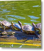Four Turtles Metal Print