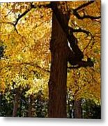 Four Yellow Trees  Metal Print