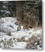 Fox Hollow Metal Print