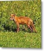 Fox In The Park Metal Print