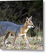 Fox On The Move Metal Print