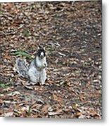 Fox Squirrel Curious Metal Print