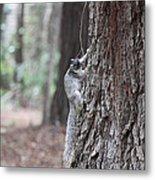 Fox Squirrel Vertical Metal Print