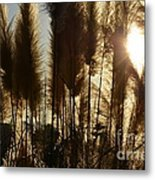 Fox Tail Metal Print