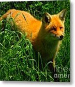 Fox Trot Metal Print