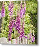 Foxglove Fence Metal Print by Anne Gilbert