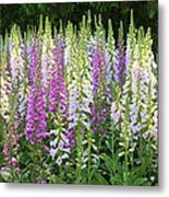Foxglove Garden In Golden Gate Park Metal Print