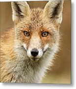 Foxy Face Metal Print