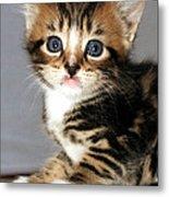 Foxy The Kittens Big Eyes Metal Print
