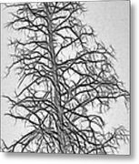Fractal Tree Abstract Metal Print