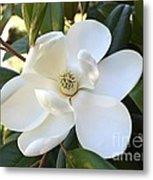 Fragrant Magnolia Metal Print
