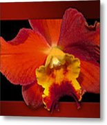 Framed Red Orchid  Metal Print