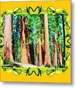 Framed Sequoias Metal Print