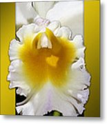 Framed White Orchid Metal Print