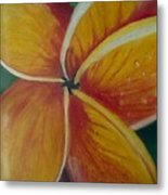 Frangipani Bloom Metal Print