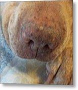 Freckled Nose Metal Print