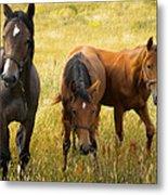 Free Happy Horse Joy On Samsoe Island Denmark  Metal Print