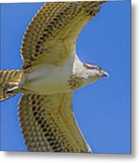 Freedom Flies Metal Print by Laura Bentley