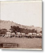 Freighting In The Black Hills. Photographed Between Sturgis Metal Print