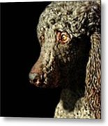 French Poodle Standard Metal Print by Diana Angstadt