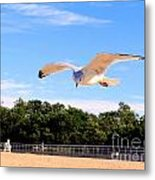 Frequent Flyer Metal Print