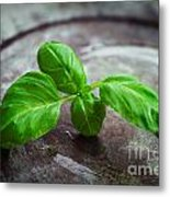 Fresh Basil Metal Print