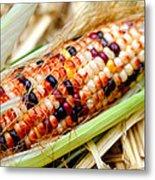 Fresh Decorative Indian Corn Metal Print