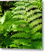 Fresh Fern - Featured 2 Metal Print