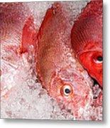 Fresh Fish 05 Metal Print