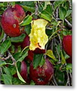 Fresh Fruit Metal Print