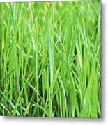 Fresh Grass Metal Print
